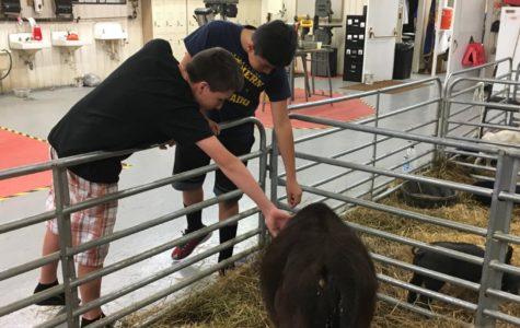 FFA kicks off year with Open Barn
