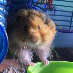 Cheese, Ava's hamster who died recently, was a reminder to constantly enjoy your pets.