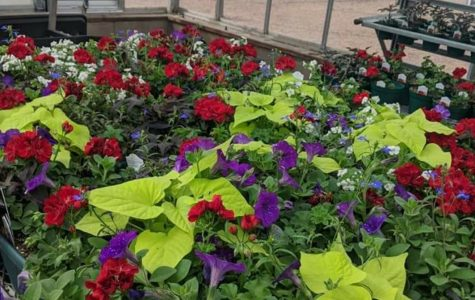 These plants are just some that will for sale this April, as the Greeley West plant sale goes online.