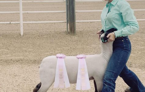 Kayla Becker poses with her prize-winning sheep.